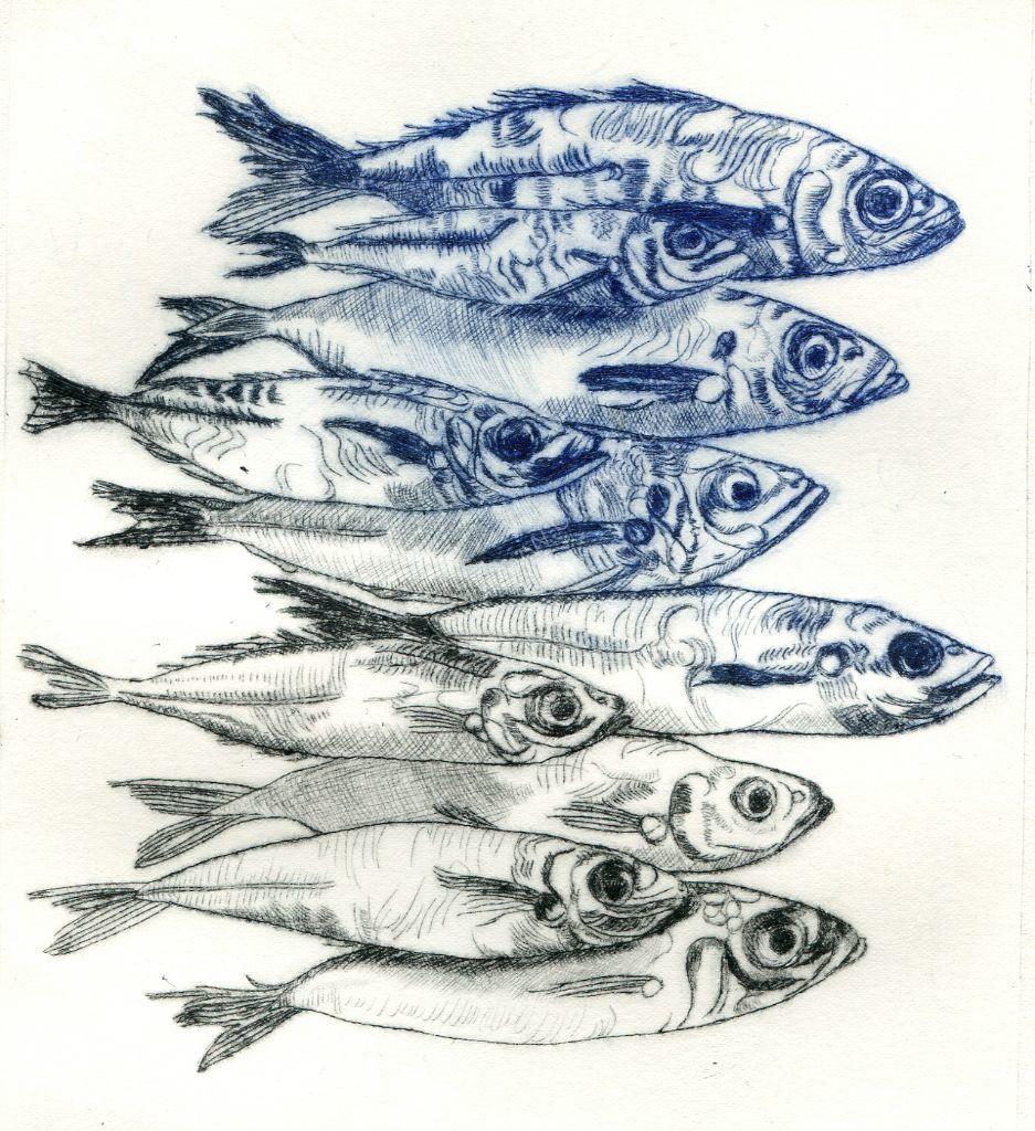 Mackerel. Drypoint print