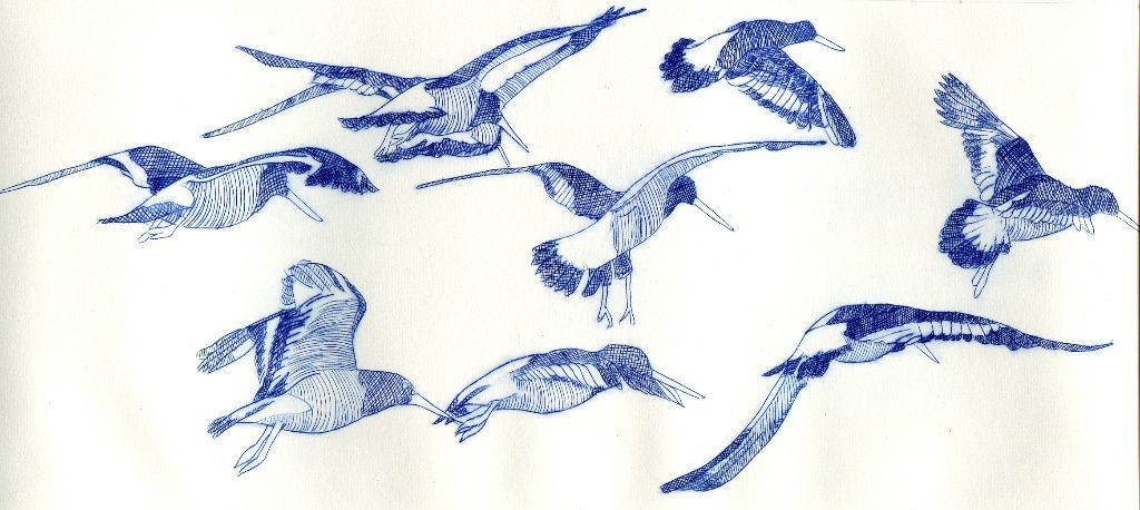 Oystercatchers in the air. Drypoint print