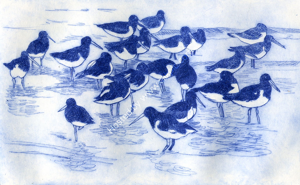 Oystercatchers on the Beach. Drypoint print