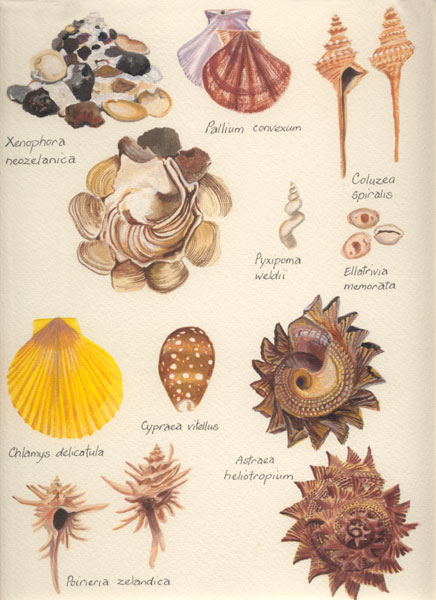 Shells from deep water