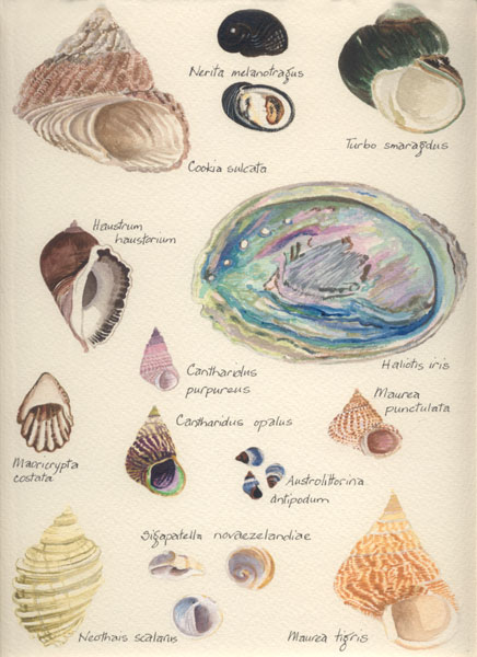 Shells of the Rocky Shore.