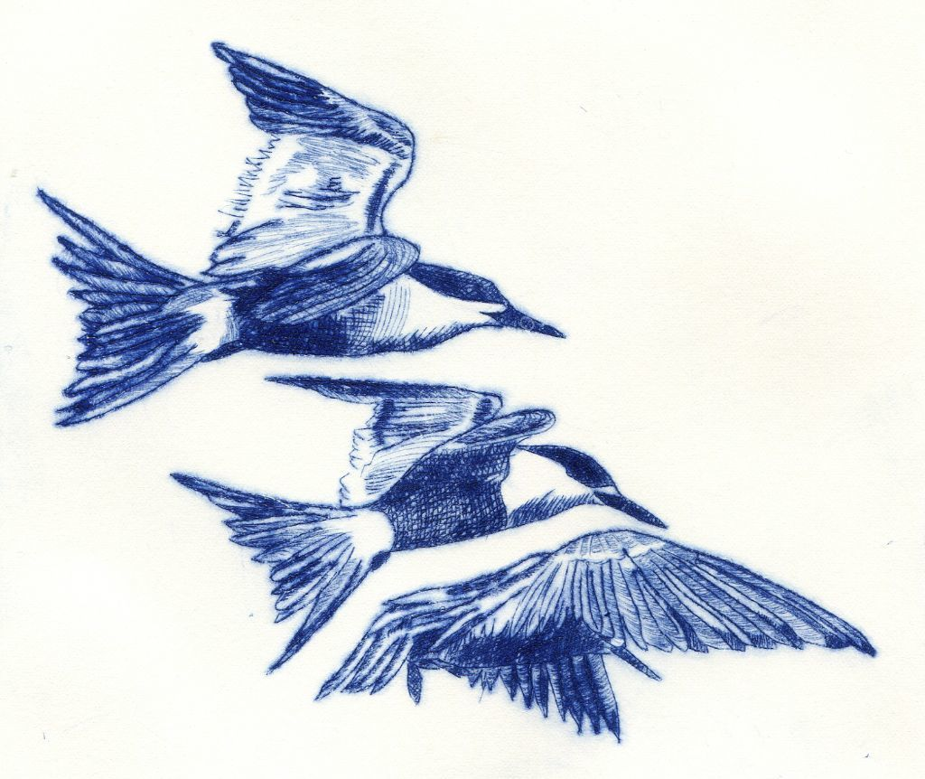 Three Terns. Drypoint print