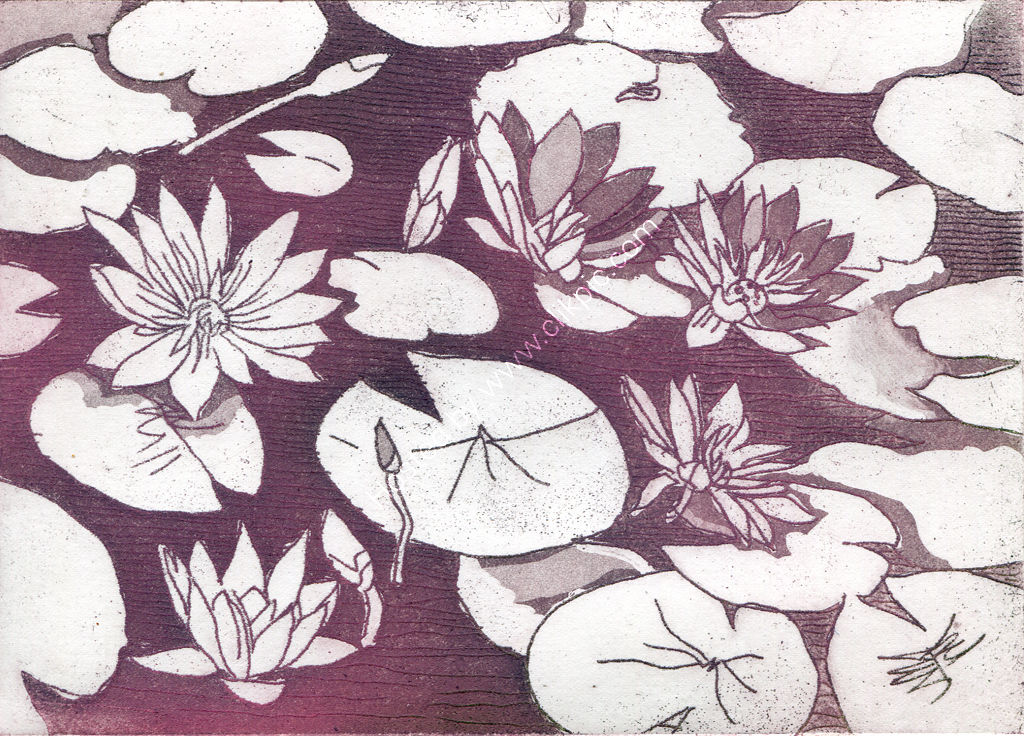 Waterlily. Etching.