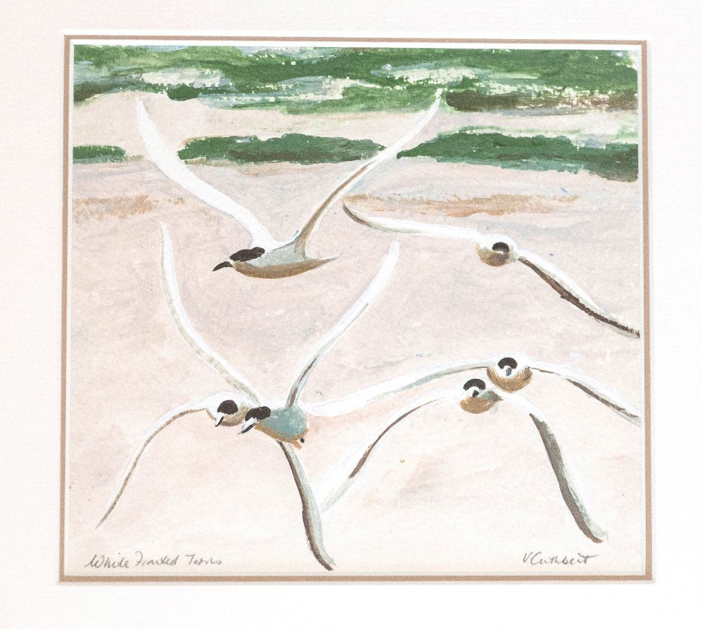 White Fronted Terns. Painting on paper.