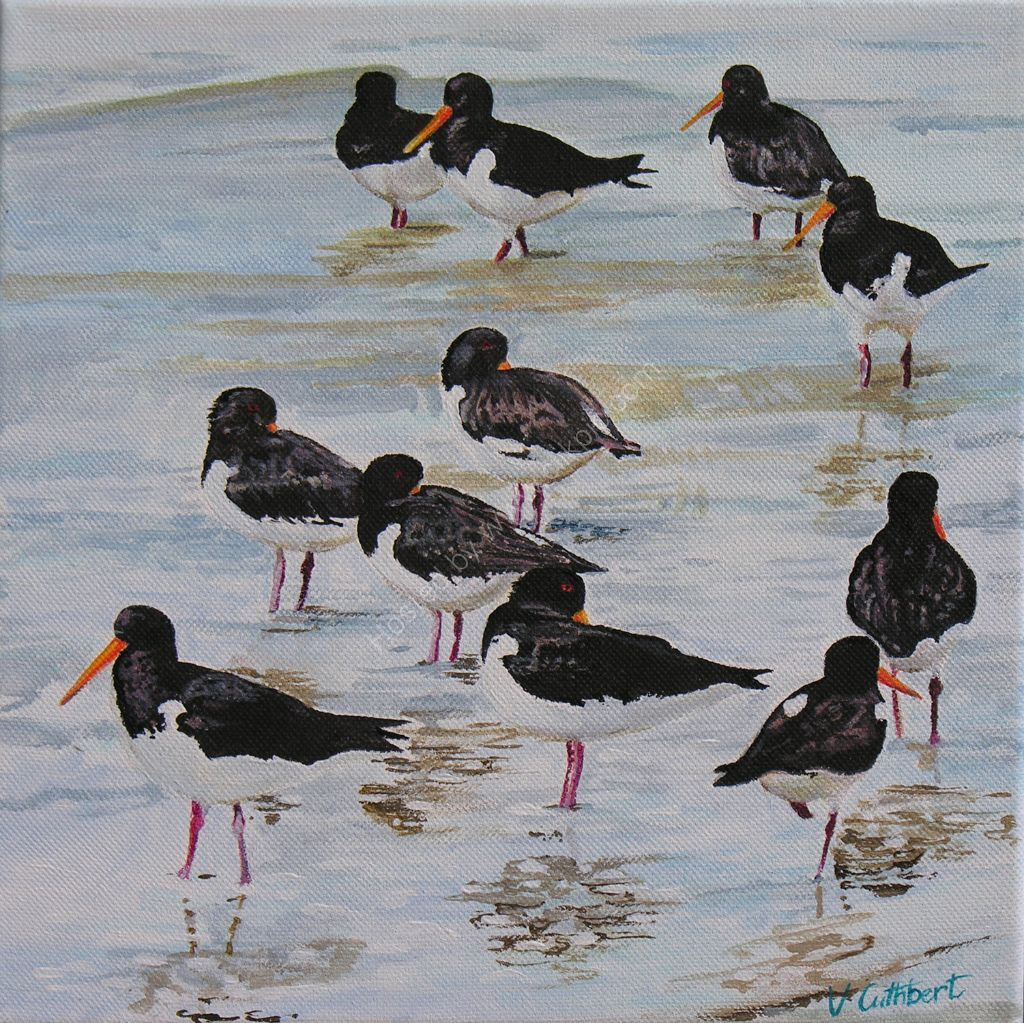 Oystercatchers. Painting on paper.