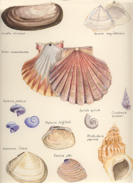 Shells of the Sandy Shore