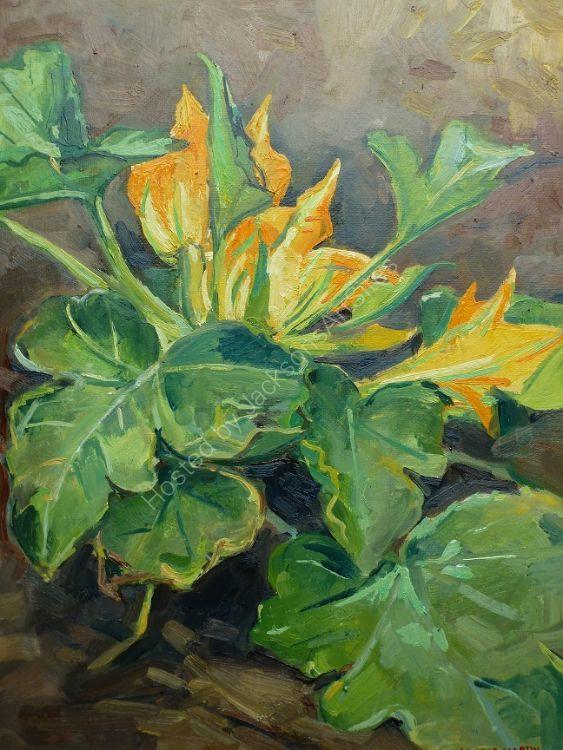 Courgette Plant at Festina Lente