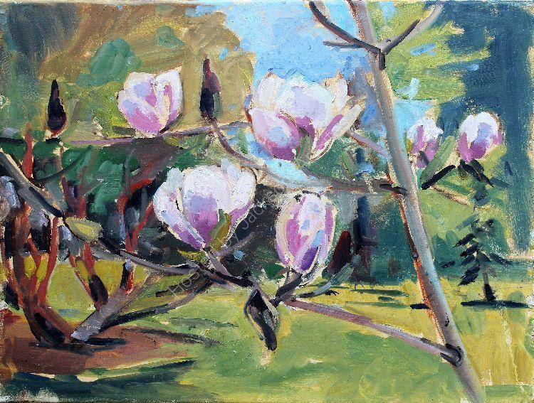 Magnolias at Farmleigh