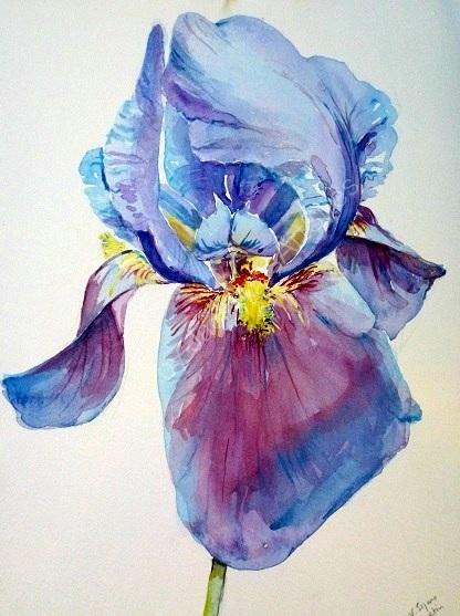 Iris.  Sold