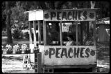 Peaches / Duraznos