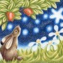 apple star gazer
