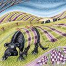 chequered pastures