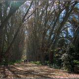 Leafy Avenue