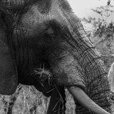 African Elephant - Addo Elephant Park-4580