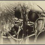 Amethyst sunbird mono