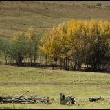 Autumn scene Underberg-