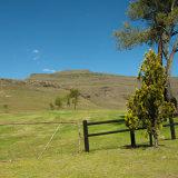 Drakensburg Scene-6281