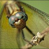 IMG 4677-Dragonfly 2