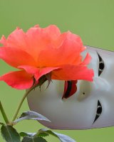 Mask and rose