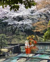 Samurai warrior is riding in a garden