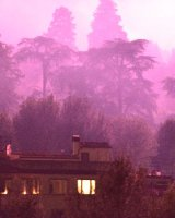 Pink landscape 2