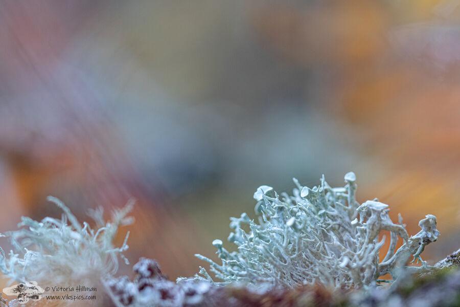 Autumn Lichens