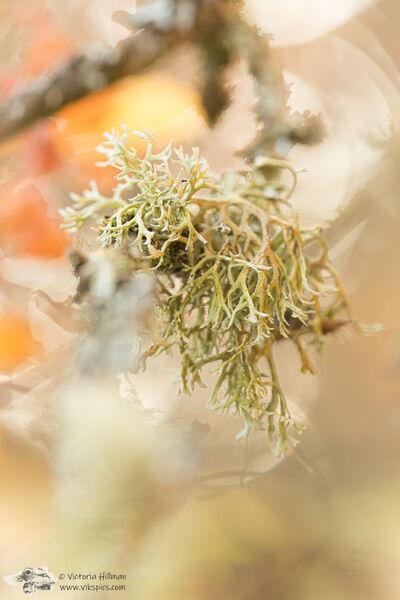 Autumn Lichens 2