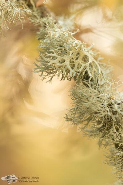 Autumn Lichens 3