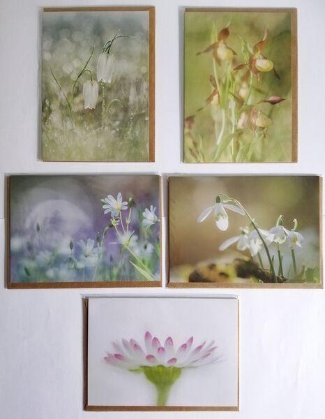 Forgotten Little Creatures Wildflowers