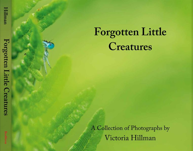 Forgotten Little Creatures Book