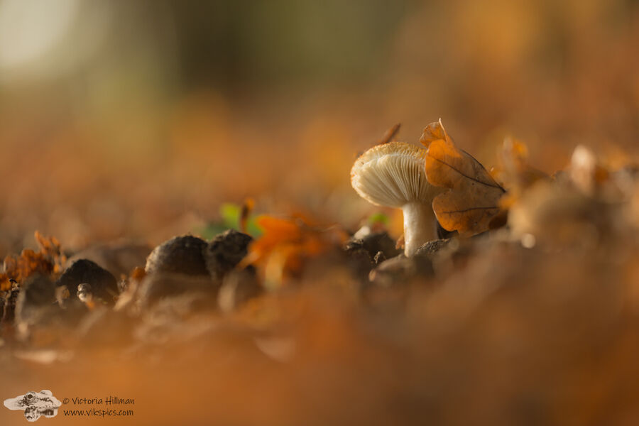 Fungi and Leaves