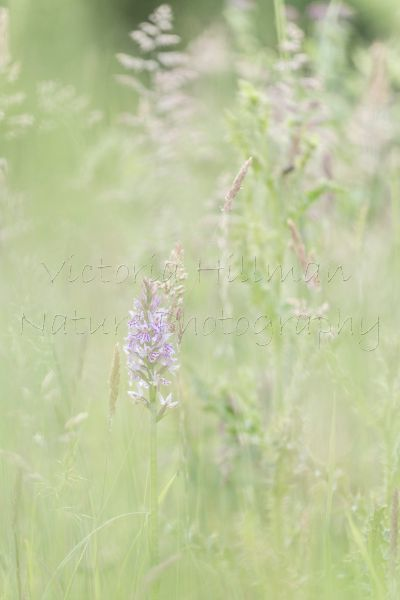 Grasses and Orchids