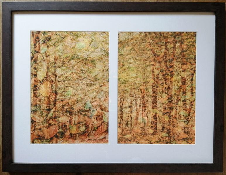 Woodland Creations
