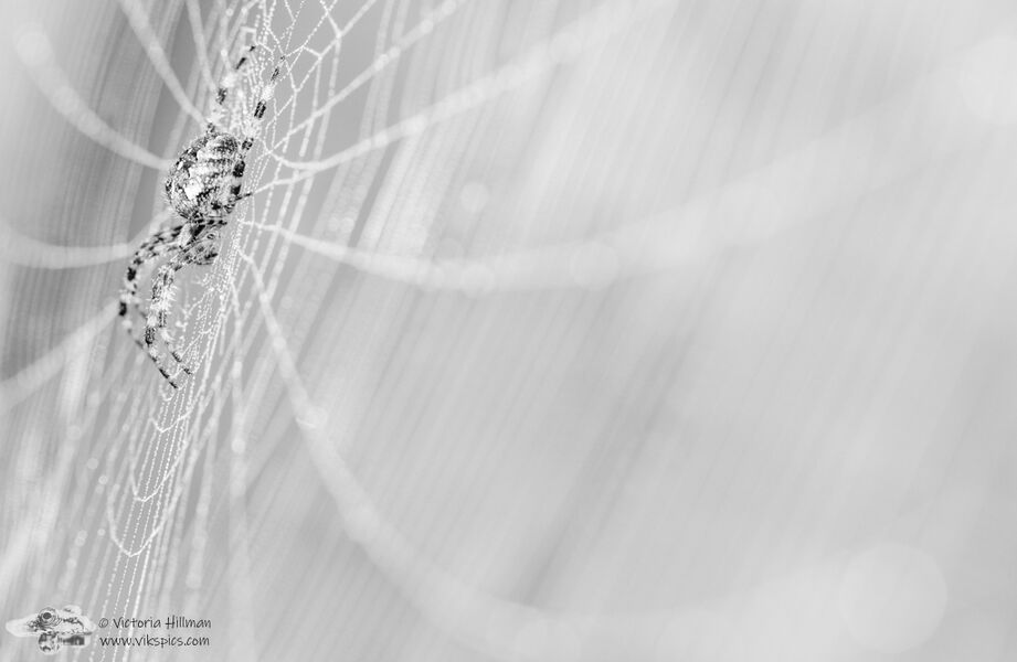 In Her Web