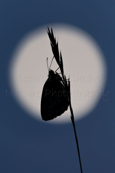 Moonlight Silhouette