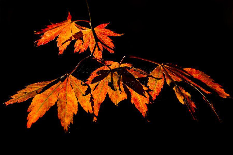 October Glow