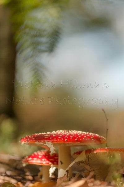 Tropical Fungi