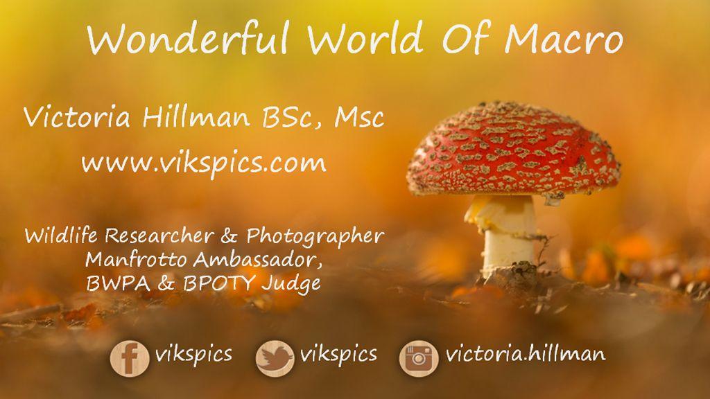 Wonderful World Of Macro