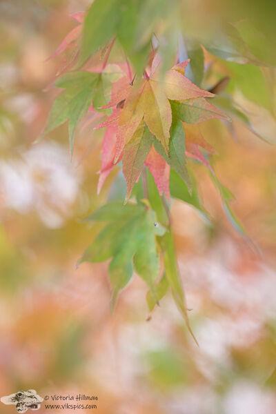 Soft Pastel Leaves
