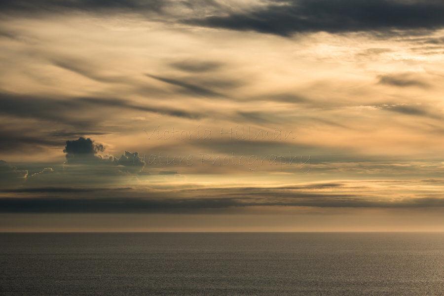 Sea Light