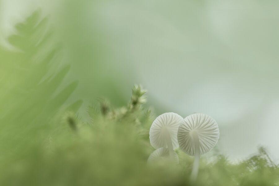 Tiny Fungi
