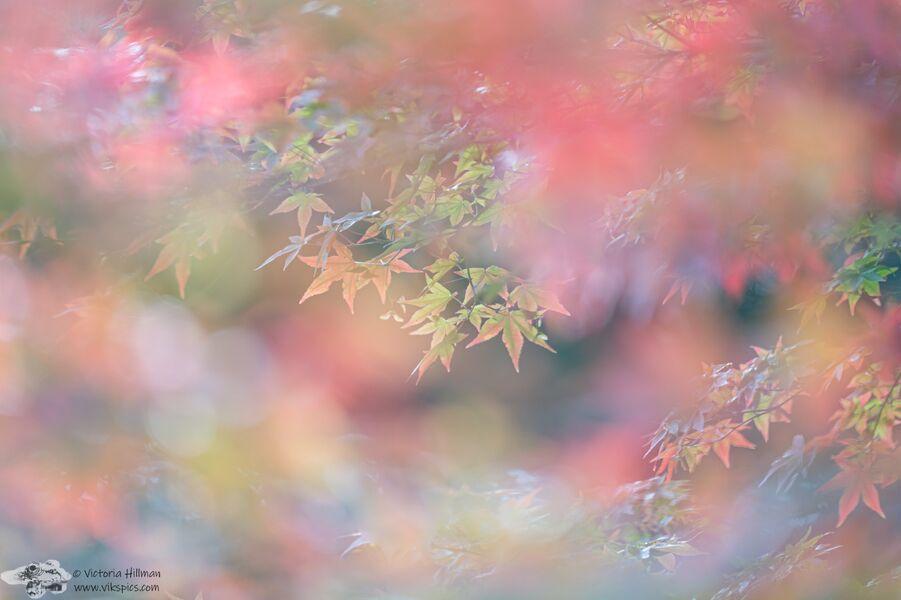 Leafy Dreams