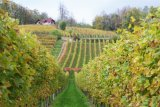 farmhouse & vineyard slovenia