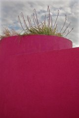 107-plant on pink wall