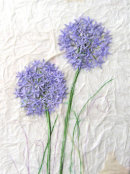'Allium Amity' Original Tissue Paper Collage On Canvas. SOLD