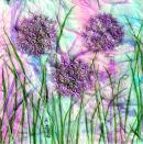'Allium Wishes' Original Tissue Paper Collage On Canvas. SOLD