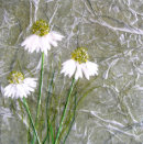 Three Wishes SOLD