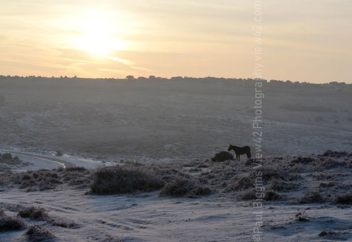 Ashley Walk New Forest winter sunrise print