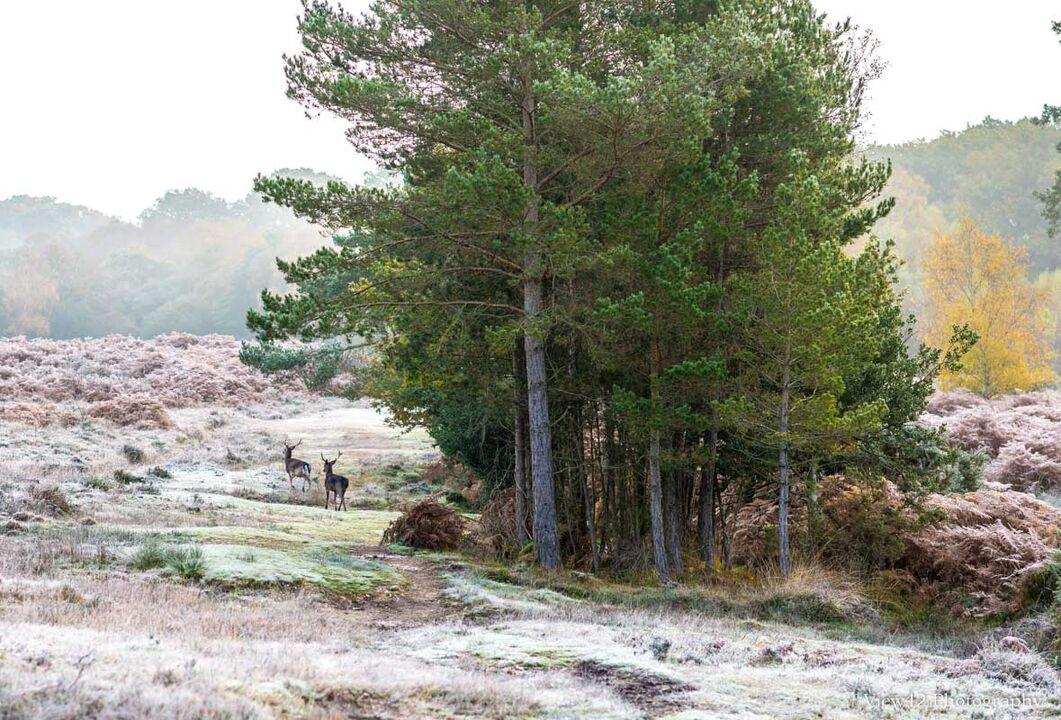 Beyond Ditchend Brook, Godshill