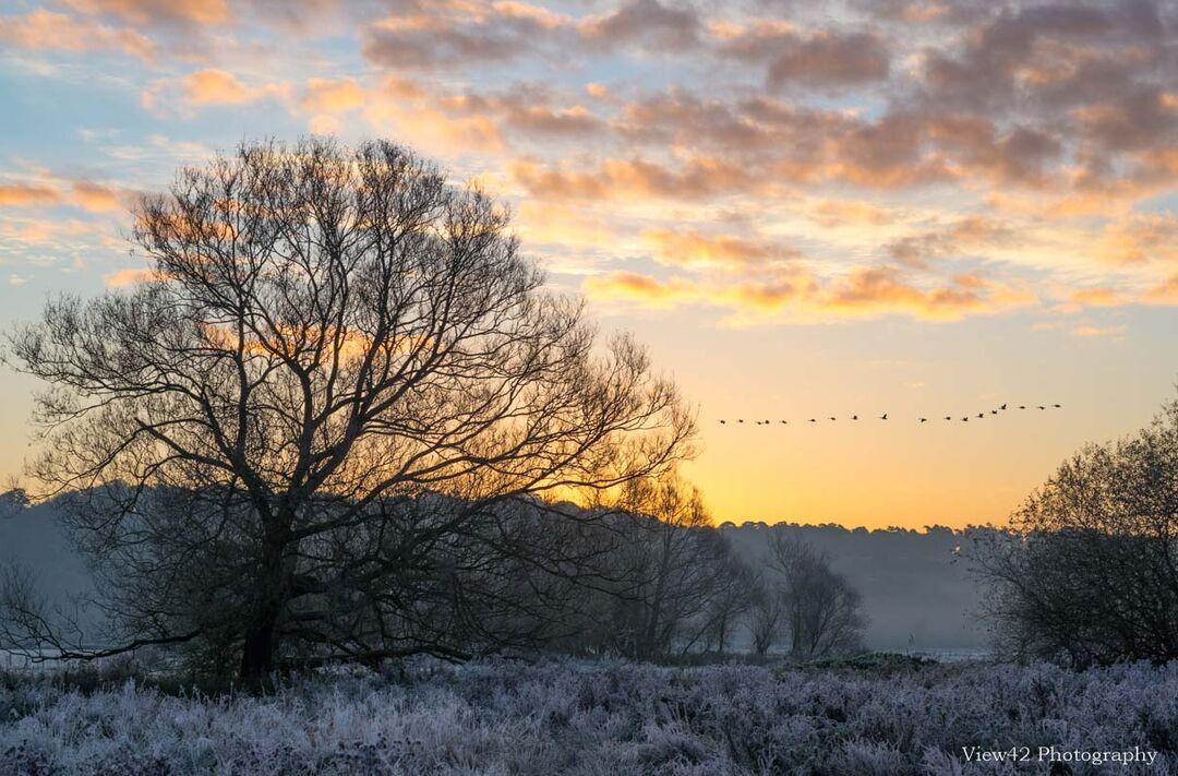 Early Morning Flight, Avon Valley